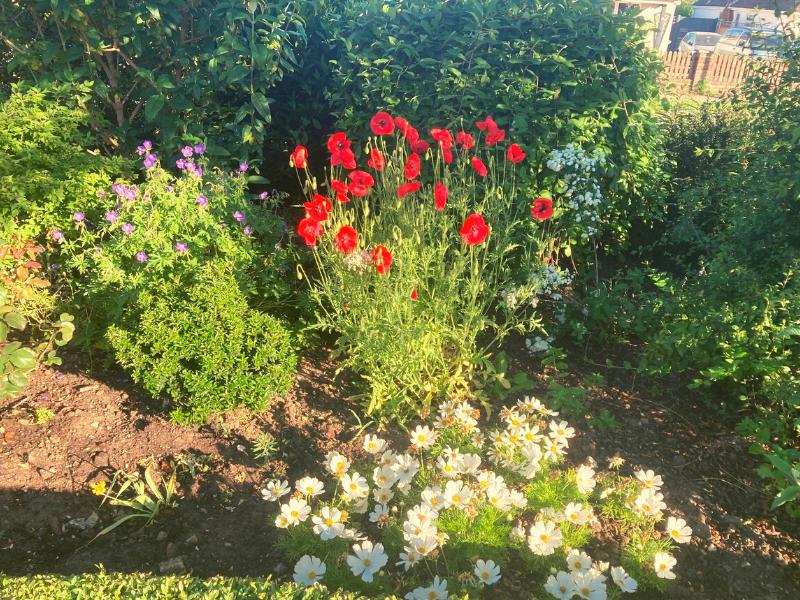 Front garden work 2021